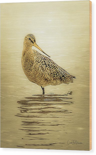 Marbled Godwit - Backward Glance Wood Print