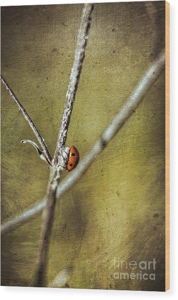 Marienkaefer - Ladybird Wood Print