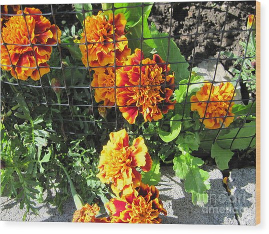 Marigolds In Prison Wood Print