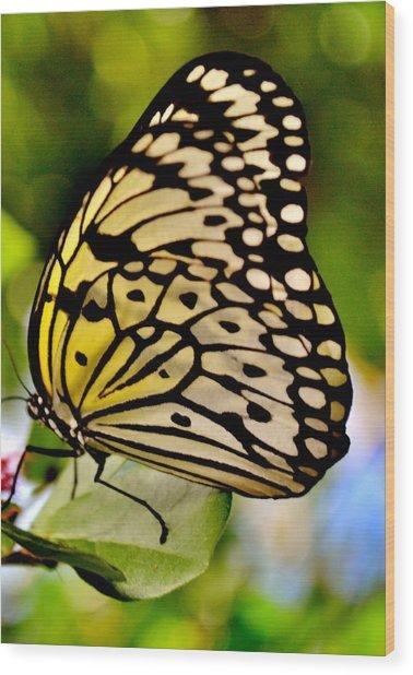 Mariposa Butterfly Wood Print