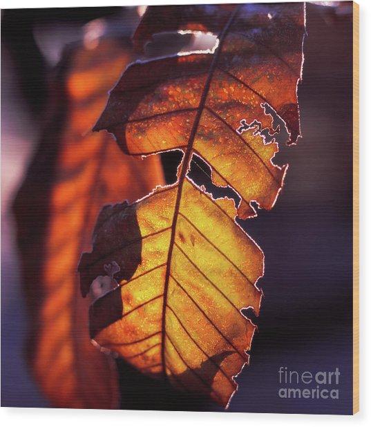 Maron Wood Print
