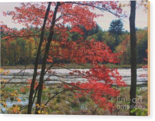 Marsh In Autumn Wood Print