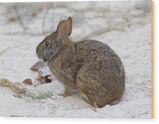 Marsh Rabbit On Dune Wood Print