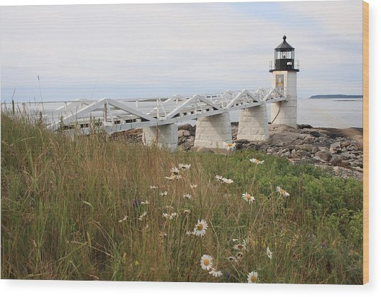 Marshall Point Daisies Wood Print