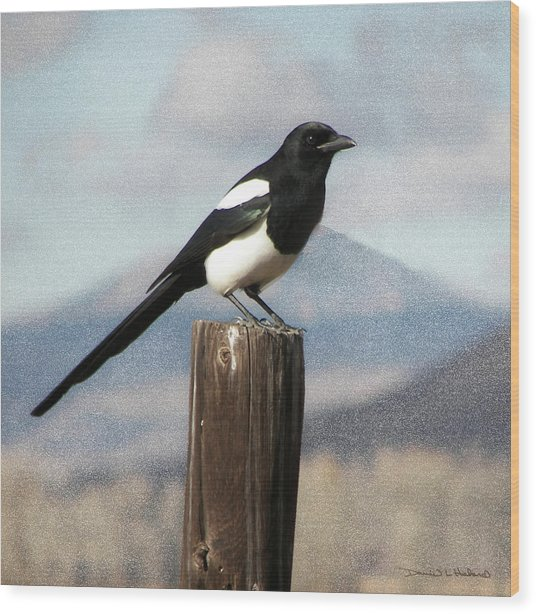 Marty The Magpie Wood Print