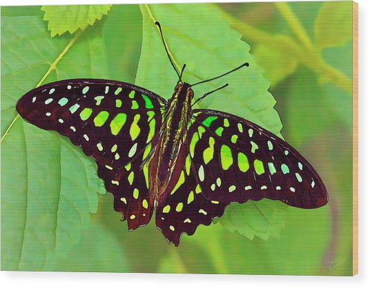 Marvelous Malachite Butterfly 2 Wood Print
