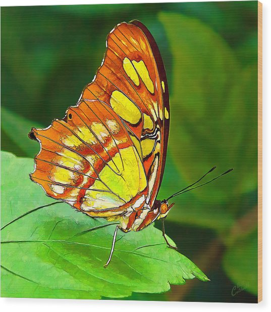 Marvelous Malachite Butterfly Wood Print