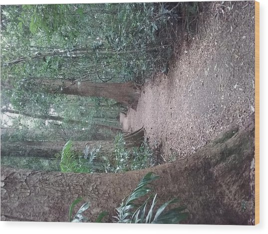Mary Cairncross Rainforest  Wood Print