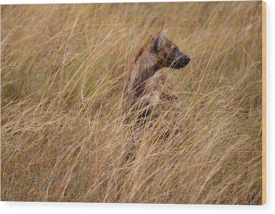 Masai Mara Hyena Wood Print by Paco Feria