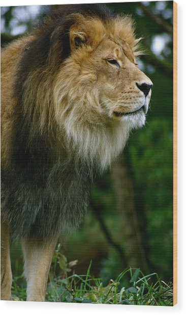 Master Of The Kingdom Wood Print by Sonja Anderson