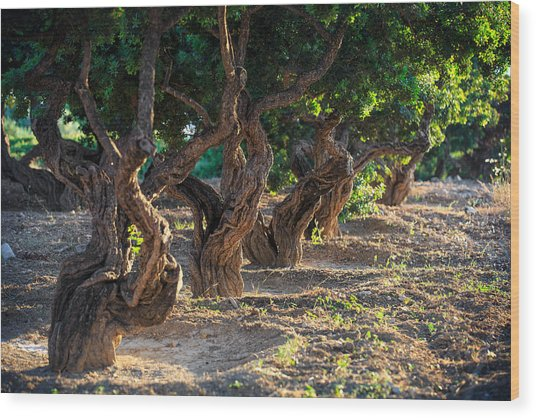 Mastic Tree   Wood Print