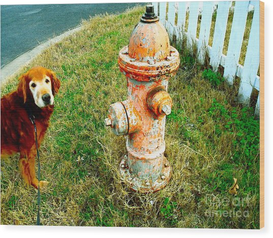 Matching Dog And Fire Hydrant Wood Print by Chuck Taylor