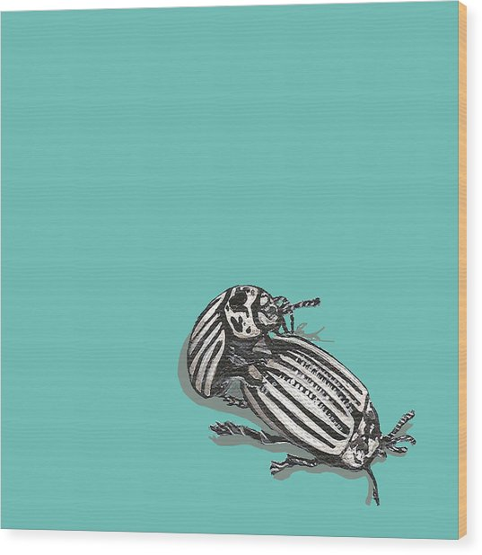 Mating Beetles Wood Print