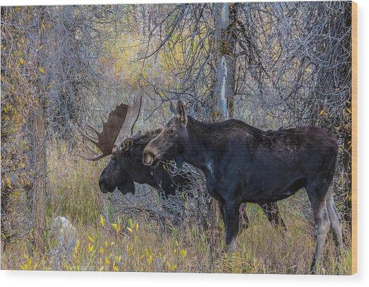 Mating Moose Wood Print