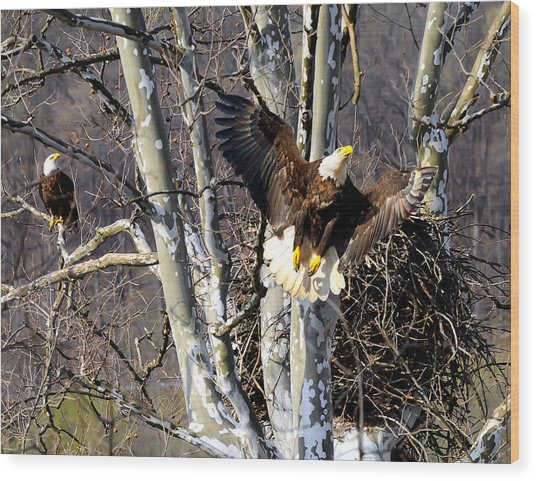 Mating Pair At Nest Wood Print