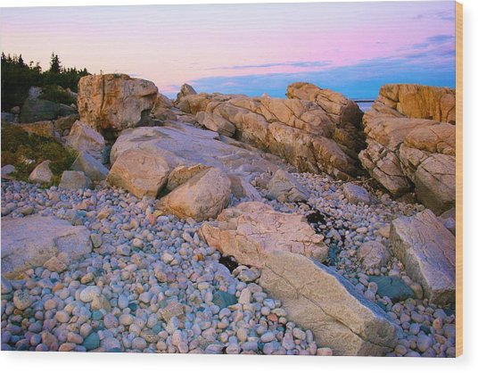 Mauve Light On Schoodic Penninsula Wood Print