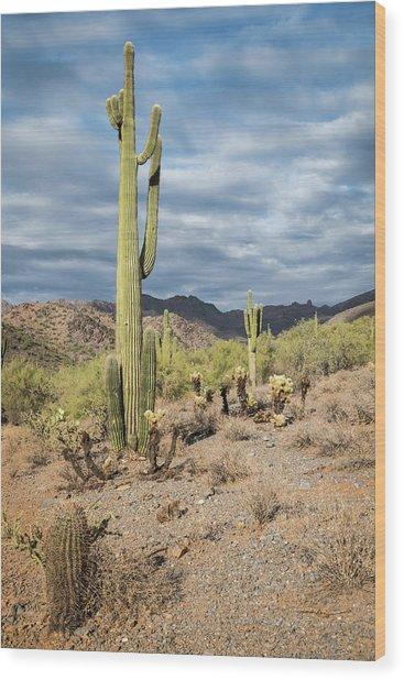 Mcdowell Cactus Wood Print