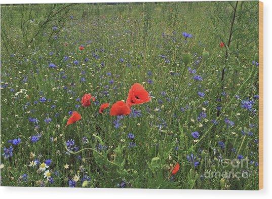 Meadow Beauty Wood Print