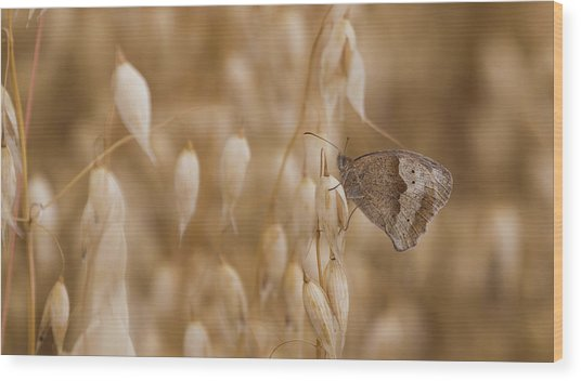 Meadow Brown Roosting Wood Print