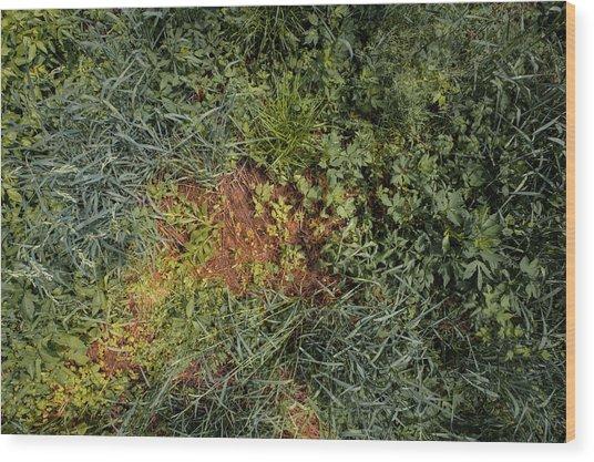 Meadow Floor Wood Print