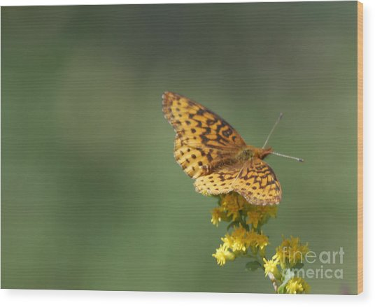 Meadow Fritillary Wood Print