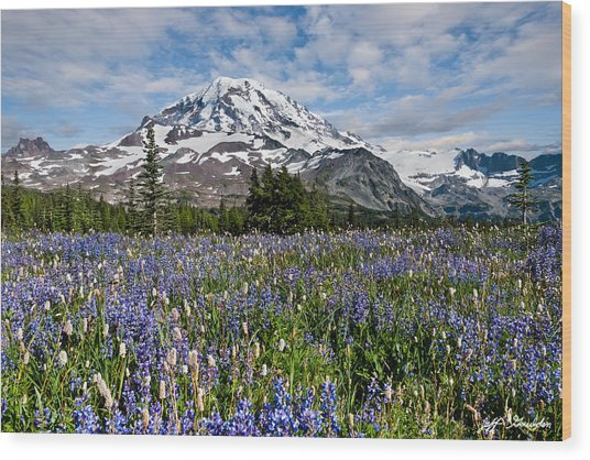 Meadow Of Lupine Near Mount Rainier Wood Print