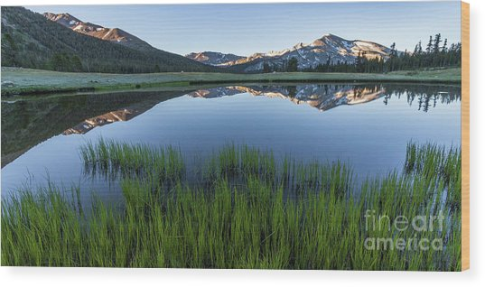 Meadow Reflections  Wood Print