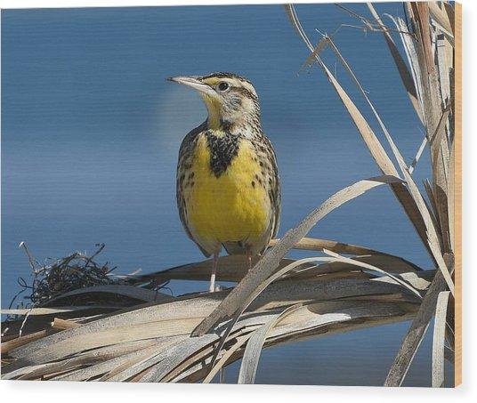 Meadowlark Beauty Wood Print