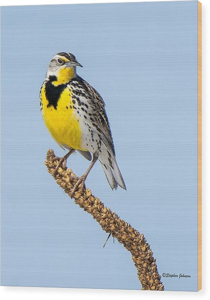 Meadowlark On Mullein Stalk Wood Print