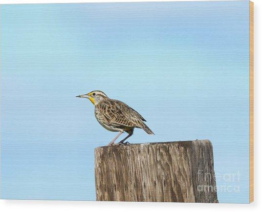 Meadowlark Roost Wood Print