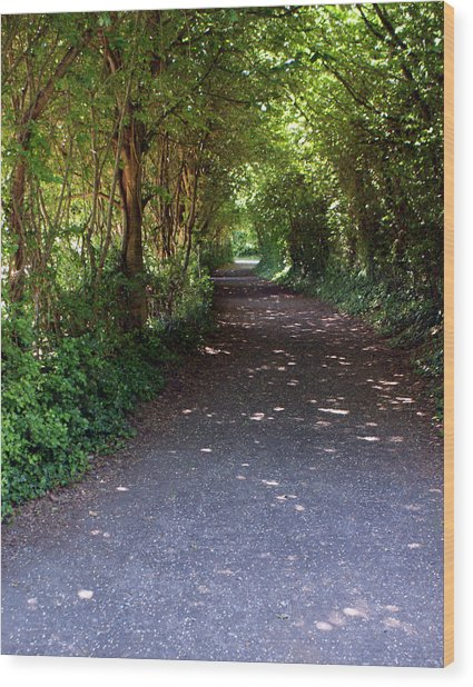 Meandering Way Wood Print by Michael  Cryer