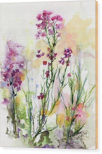 Medicinal Wild Flowers Dames Rocket Hesperus Matronalis Wood Print