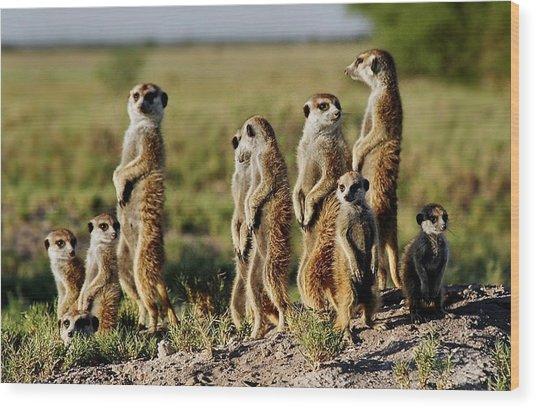 Meerkat Family Wood Print