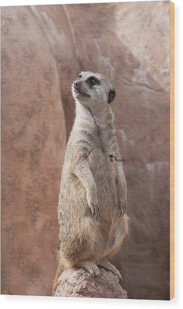Meerkat Sentry 1 Wood Print