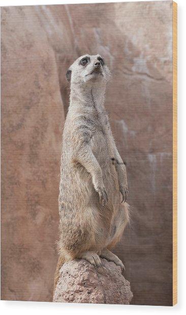 Meerkat Sentry 2 Wood Print