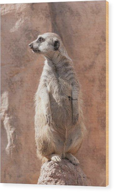Meerkat Sentry 5 Wood Print