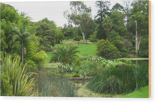 Melbourne Botanical Gardens Wood Print