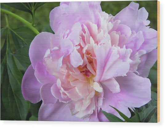 Melissa's Flower Wood Print by JAMART Photography