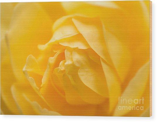 Mellow Yellow Rose Wood Print