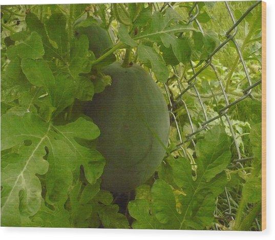 Melon Wood Print by Stephen Davis