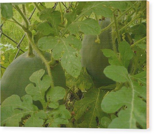 Melons Wood Print by Stephen Davis