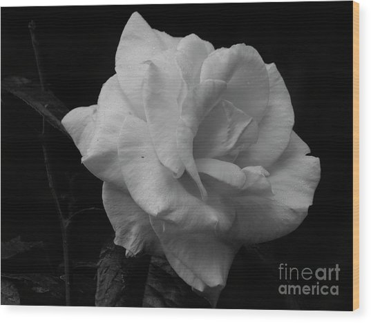 Mendocino Rose01 Wood Print