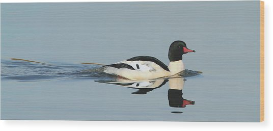Merganser Panorama Wood Print
