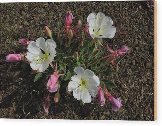 Mesa Blooms Wood Print