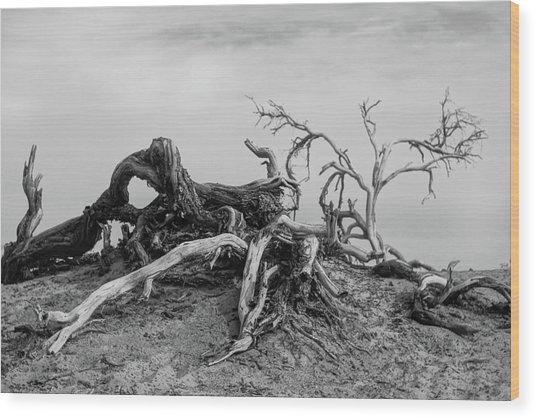 Mesquite Roots - Death Valley 2015 Wood Print