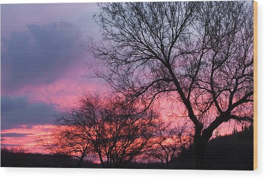 Mesquite Tree Sunset Wood Print