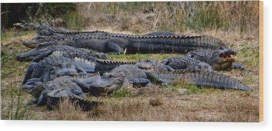 Mess 'o Alligators Wood Print