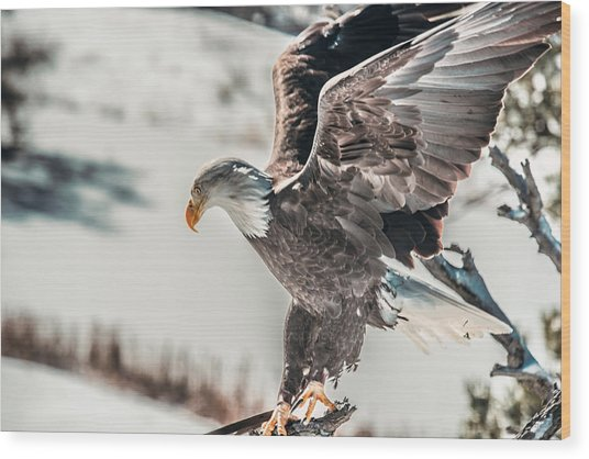 Metallic Bald Eagle  Wood Print