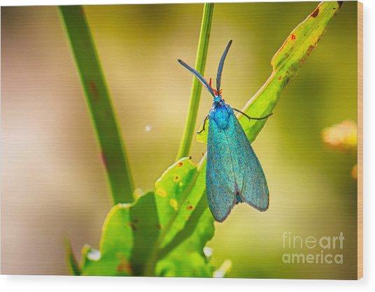 Metallic Forester Moth Wood Print