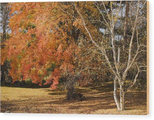Michigan Autumn 1 Wood Print